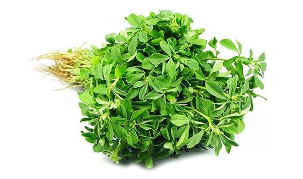 A Greek And Unani Herbal: Fenugreek